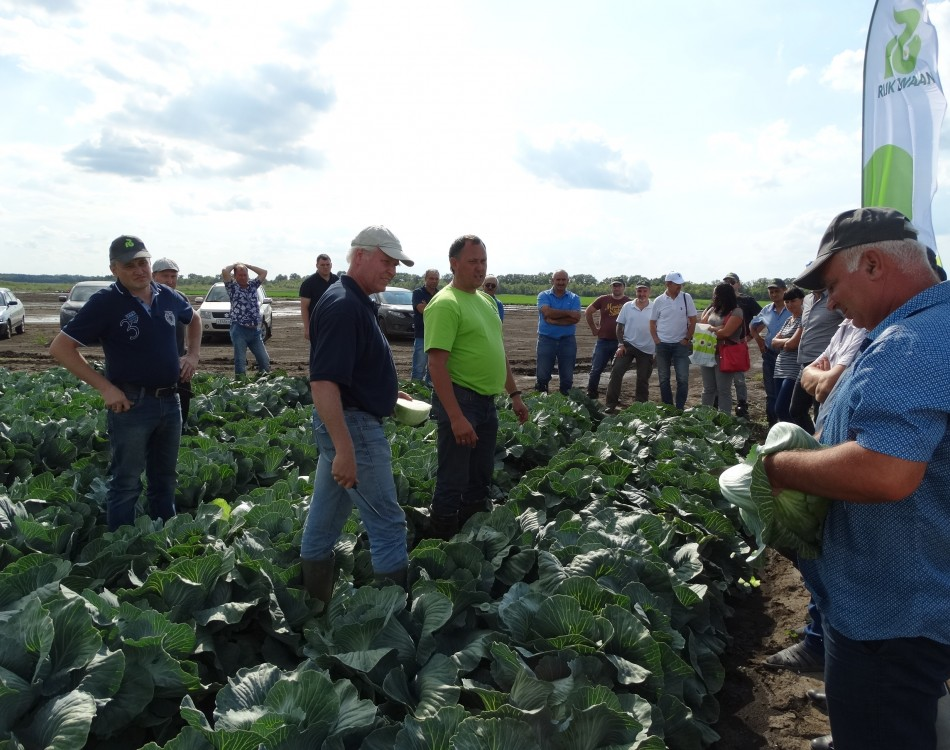 Cabbage Field Day Rostov on Don 3